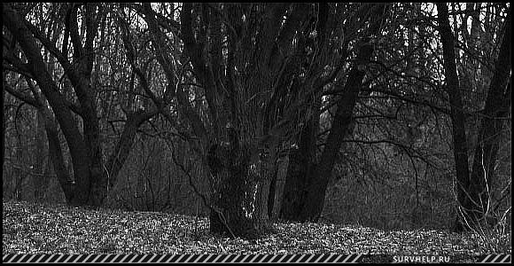 Видения в лесу - призрак