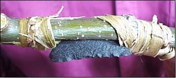 Каменное лезвие в ноже