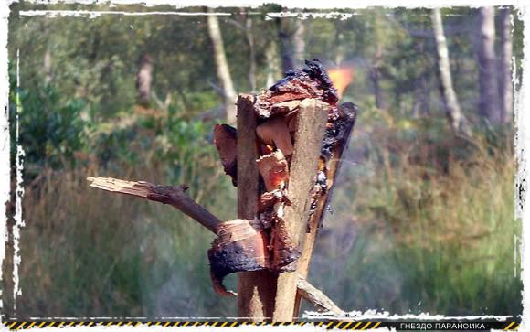 Факел из смолы сосны