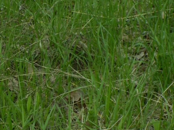 поиск гнезд и яиц птиц