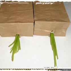 Сушка зелени и трав без сушилки
