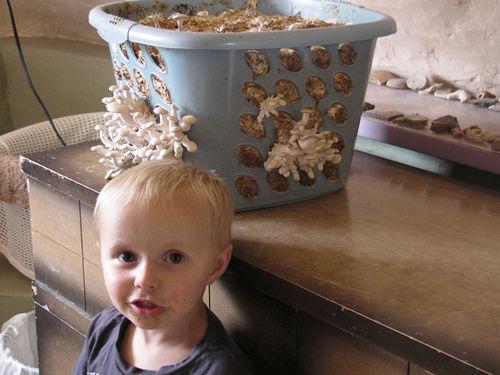 Созревание грибов в корзине